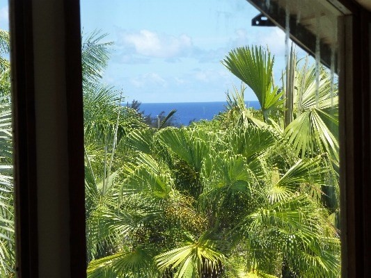 Lovely large 784 SF lanai is breezy and beautiful view of ocean, pool and yard.